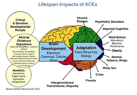 ACE_Lifespan_chart
